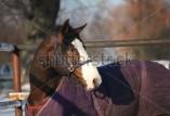 horse-blankets1